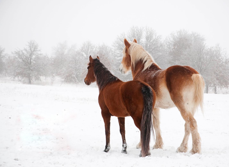 обои для рабочего стола зимние лошади № 465239 бесплатно